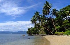 Drzewka palmowe na plaży, Vanua Levu wyspa, Fiji Obraz Royalty Free