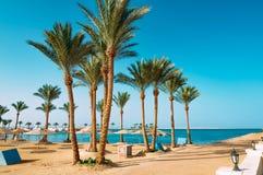 Drzewka palmowe na plaży w Egipt na Czerwonym morzu zdjęcia stock