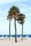 Drzewka Palmowe na plaży Obraz Stock