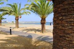 Drzewka Palmowe na plaży Zdjęcia Stock