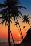 Drzewka palmowe na plaży przy zmierzchu czasem Fotografia Royalty Free