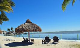 Drzewka palmowe na plaży w Floryda Zdjęcie Royalty Free