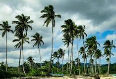 Drzewka palmowe na Rincon plaży republika dominikańska Fotografia Royalty Free