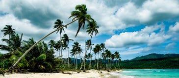 Drzewka palmowe na Rincon plaży republika dominikańska Obraz Stock