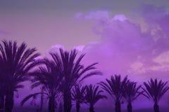 Drzewka Palmowe na Stonowanym Pozafioletowym nieba tle fotografia royalty free