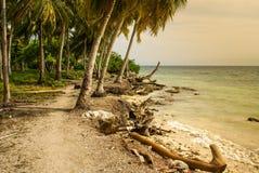 Drzewka palmowe na tropikalnej plaży w Colombia, Ameryka Sura Fotografia Royalty Free
