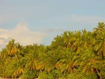 Drzewka palmowe na wyspach, Azjatyckie wyspy zdjęcia stock