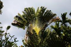 Drzewka palmowe na wyspie popołudnie - Ko Chang, Tajlandia, Kwiecień 2018 - obraz royalty free