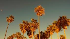 Drzewka palmowe nad niebem przy Venice plażą, California zbiory