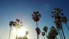 Drzewka palmowe nad słońca jaśnieniem w niebieskim niebie zbiory wideo