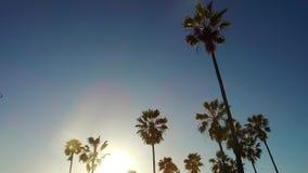 Drzewka palmowe nad słońca jaśnieniem w niebieskim niebie zdjęcie wideo