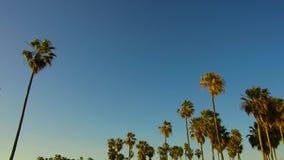 Drzewka palmowe nad słońca jaśnieniem w niebieskim niebie zbiory