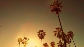 Drzewka palmowe nad słońcem przy Venice plażą, California zbiory wideo