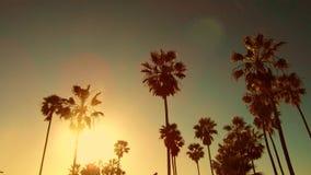 Drzewka palmowe nad słońcem przy Venice plażą, California zdjęcie wideo