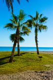Drzewka palmowe oaza Obraz Royalty Free