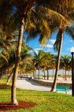 Drzewka palmowe obramiają ścieżkę przez Lummus parka, Miami plaża Obrazy Stock