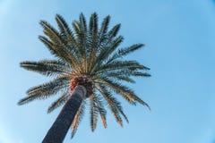 Drzewka Palmowe - Perfect drzewka palmowe przeciw pi?knemu niebieskiemu niebu fotografia royalty free