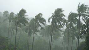 Drzewka palmowe pod ciężkim tropikalnym deszczem zbiory