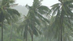Drzewka palmowe pod ciężkim tropikalnym deszczem zbiory wideo