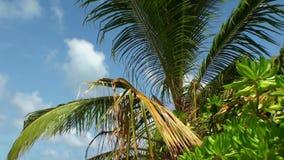 Drzewka palmowe pod jaskrawym słońcem na plaży w Maldives zbiory