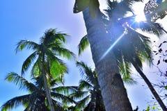 Drzewka palmowe pod niebieskim niebem fotografia royalty free