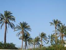 Drzewka palmowe pod niebieskim niebem Zdjęcia Stock