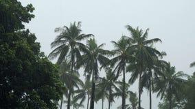 Drzewka palmowe pod tropikalnym deszczem zbiory
