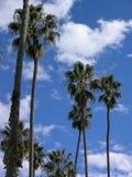 Drzewka palmowe przeciw chmurom i niebieskiemu niebu Zdjęcie Royalty Free