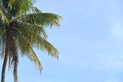 Drzewka palmowe przeciw niebu obraz royalty free