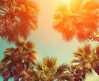 Drzewka palmowe przeciw niebu fotografia stock