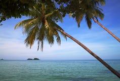 Drzewka palmowe przeciw tropikalnym wyspom w oceanie Obraz Stock