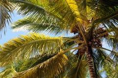 Drzewka Palmowe Przed linią horyzontu Fotografia Royalty Free