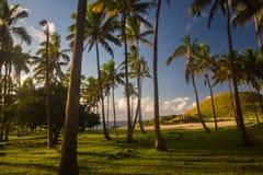 Drzewka palmowe przy Anakena plażą w Wielkanocnej wyspie Obraz Royalty Free