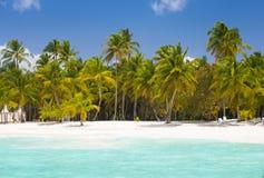 Drzewka palmowe przy błękitną laguną Zdjęcia Stock