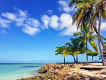 Drzewka Palmowe przy Gołębim punktem zdjęcia stock