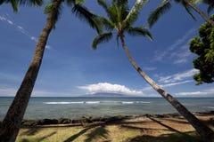 Drzewka palmowe przy Launiupoko plaży parkiem blisko Lahaina, Maui, Hawaje Fotografia Stock