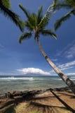 Drzewka palmowe przy Launiupoko plaży parkiem blisko Lahaina, Maui, Hawaje Obraz Stock