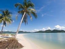 Drzewka palmowe przy nadmorski na Ko Yao Yai wyspie, Tajlandia, Azja Zdjęcie Stock