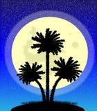 Drzewka palmowe przy noc ilustracji