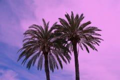 Drzewka palmowe przy noc Fotografia Stock
