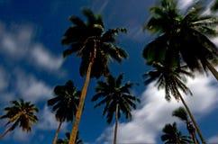 Drzewka palmowe przy nocą w Aitutaki laguny Kucbarskiej wyspie Zdjęcia Stock
