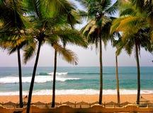 Drzewka palmowe przy oceanem suną z dużą fala Obraz Royalty Free