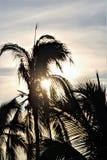 Drzewka palmowe przy półmrokiem Zdjęcia Royalty Free