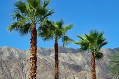 Drzewka palmowe przy palm springs Kalifornia Obrazy Royalty Free