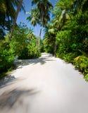 Drzewka palmowe przy tropikalną plażą Zdjęcie Royalty Free