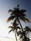 Drzewka palmowe przy wieczór Zdjęcia Royalty Free