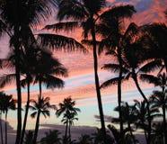 Drzewka Palmowe przy zmierzchem fotografia royalty free
