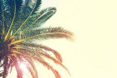 Drzewka palmowe rozgałęziają się przeciw niebu tropikalny tło zdjęcie stock