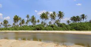 Drzewka palmowe rzeką Fotografia Stock