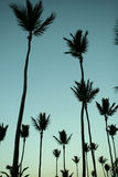 drzewka palmowe tropikalni Obrazy Royalty Free